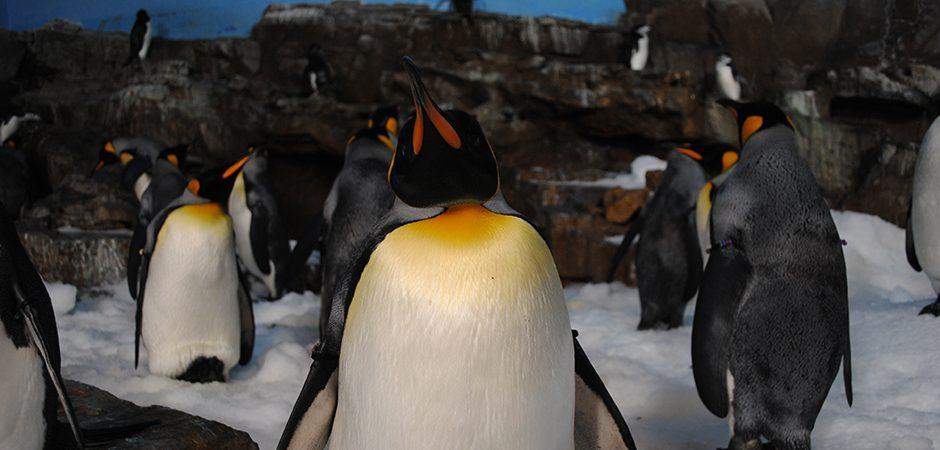 Pinguine - das Maskottchen von Linux